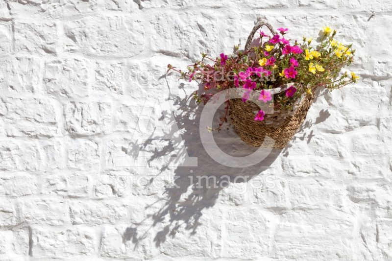 Basket With Flowers Hanging On A Wall White Light. A Basket Insi Angelo Cordeschi